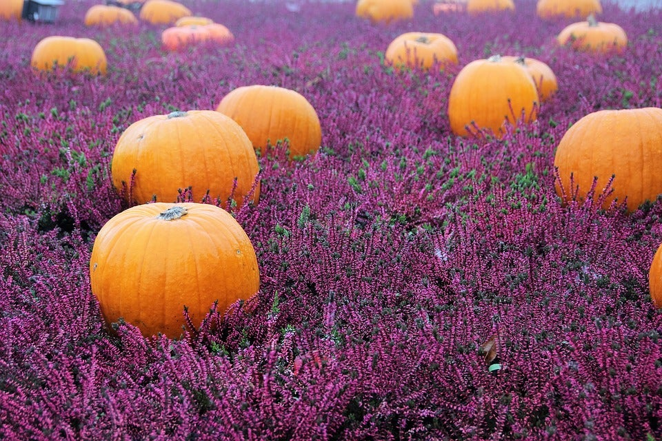Halloween gift ideas and fall flowers as gifts