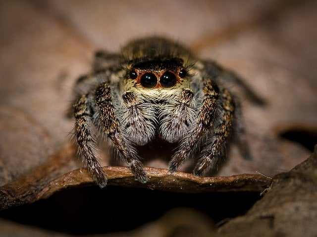 Halloween history and why spiders are popular halloween symbols
