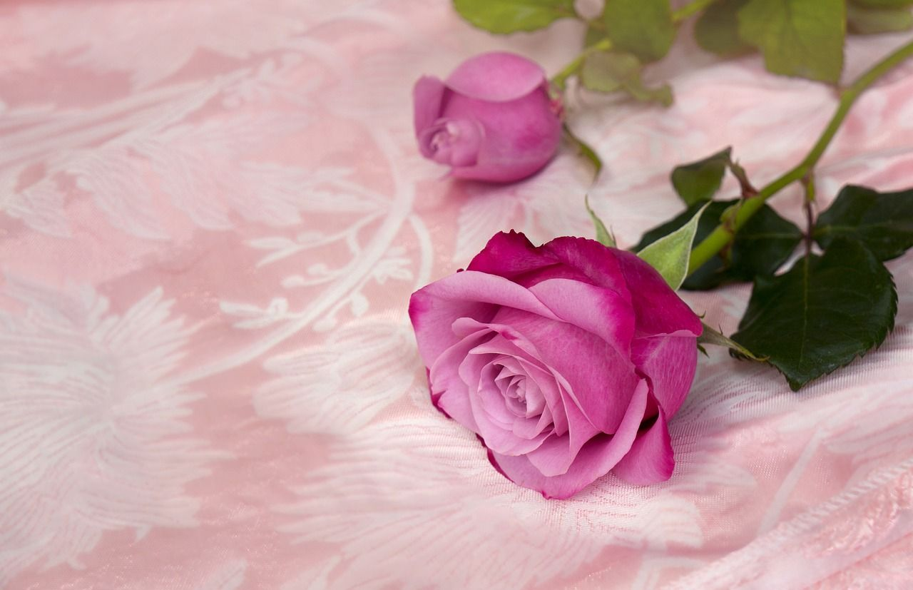 most popular valentines day flowers number 4 pink roses