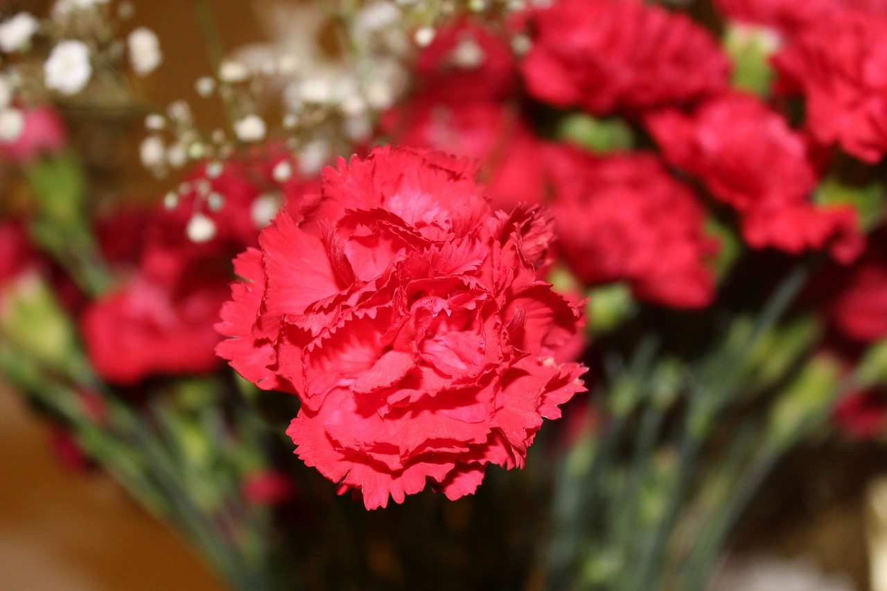 most popular valentines day flowers red carnations are number 2
