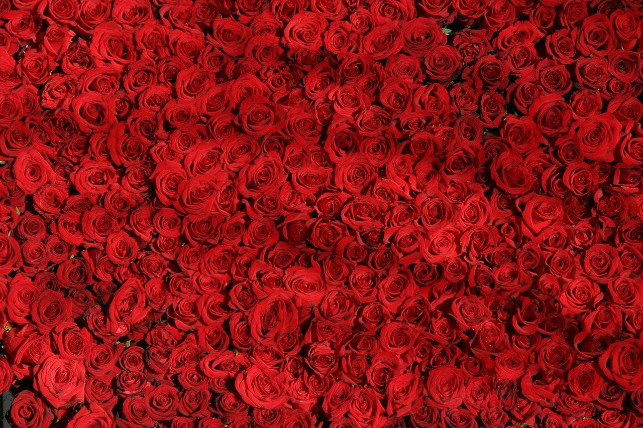 most popular valentines day flowers red roses number 1