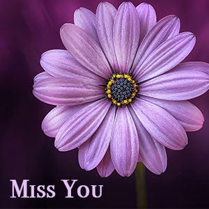 Flowers for all occasions miss you flowers and i miss you flowers