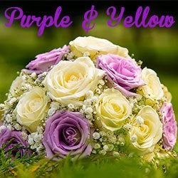 Colors of flowers and favorite floral colors purple and yellow flowers