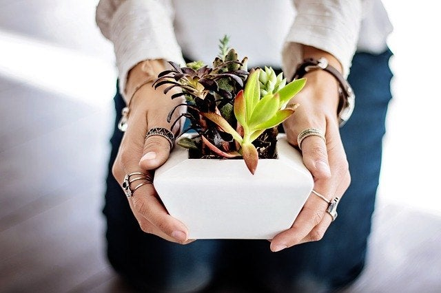 sending sympathy plants for a loss and sympathy plant meaning
