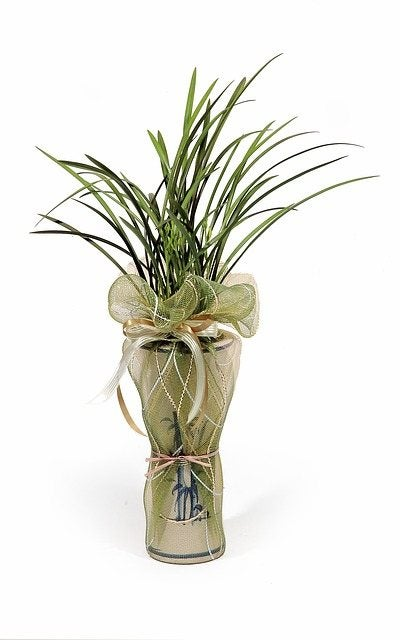 sending sympathy plants for a loss and the meaning of sympathy plants