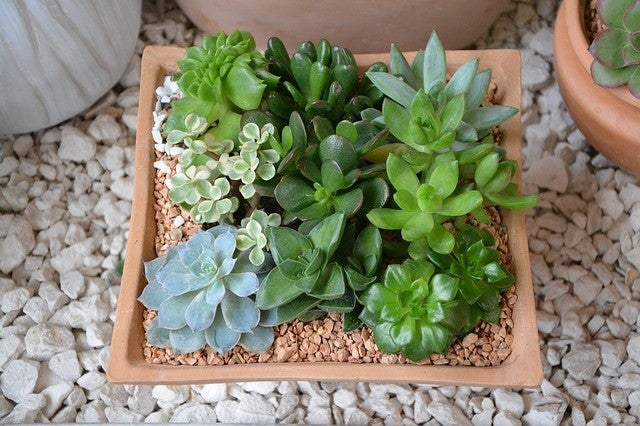 sending sympathy plants for a loss and sympathy plants meaning