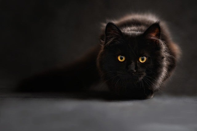whats the meaning of halloween black cat symbol