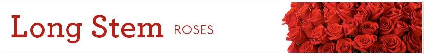 Long Stem Roses at Send Flowers