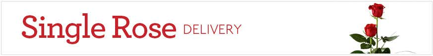 Single Rose Delivery at Send Flowers