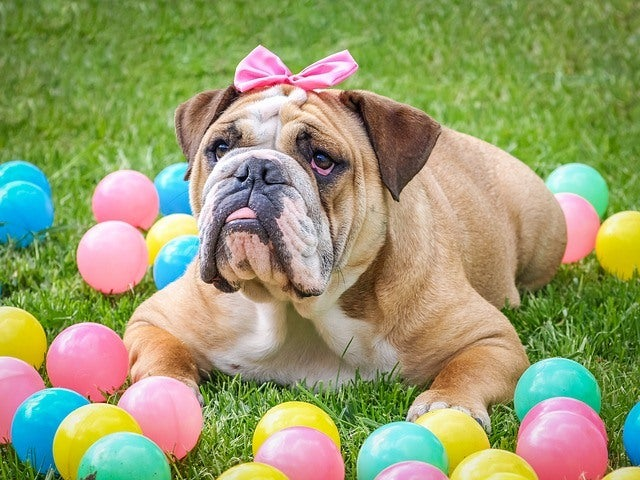 cheap easter gift baskets for kids and easter dog cute