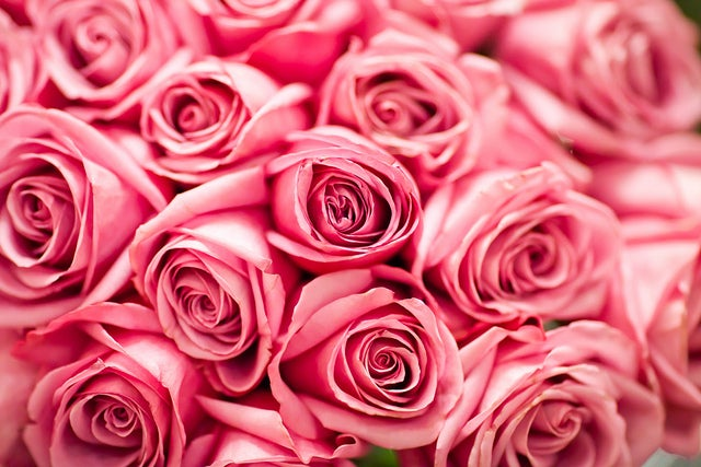 Pink roses are girls favorite flowers for cheap flower delivery