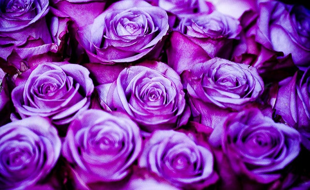 Shop purple roses online at send flowers com, purple rose bouquets
