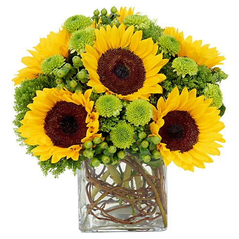 modern sunflower bouquet with green buton poms, jade trachelium and hypericum