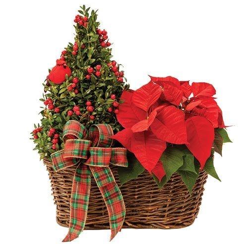Christmas Poinsettia and Tree Duo