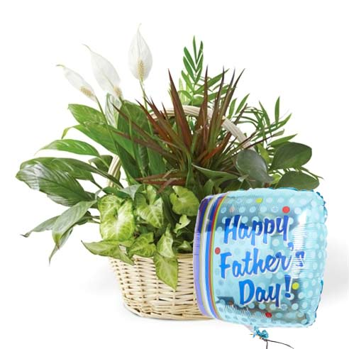 fathers day green plant dish garden with printed fathers day mylar balloon