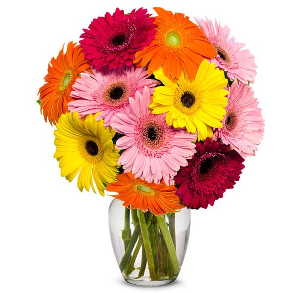 Gerbera daisies in a boxed flowers delivery of mixed daisies and cheap flowers