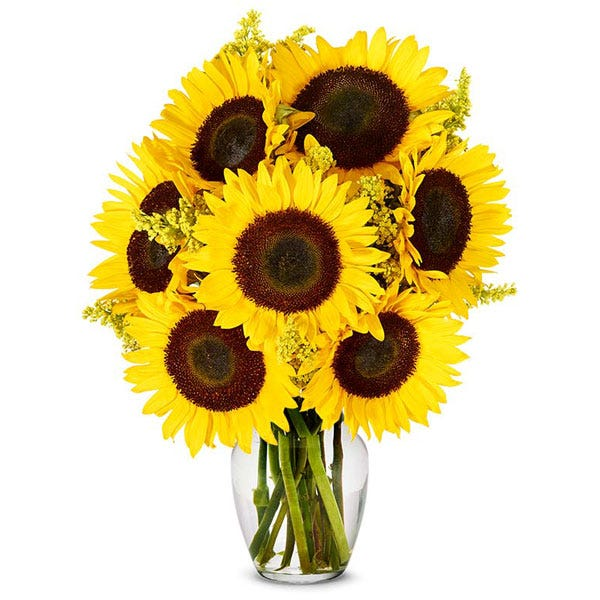 Sunflower arrangements and cheap flowers with long stem sunflowers
