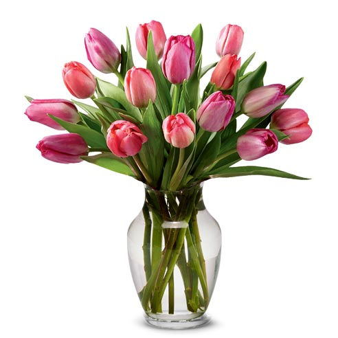 Cute valentines day gift delivery of pink tulips in a vase