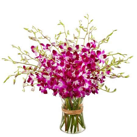Cheap mothers day gift delivery and pink orchids delivery