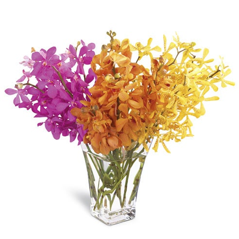 Send flowers today like orchids with receive free flowers delivered