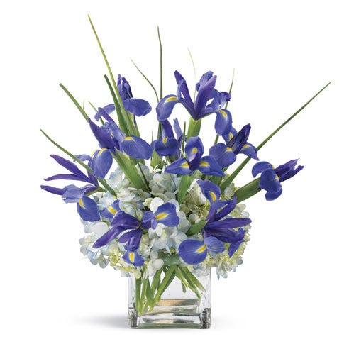 Modern blue iris and blue hydrangea flower bouquet in a square glass vase
