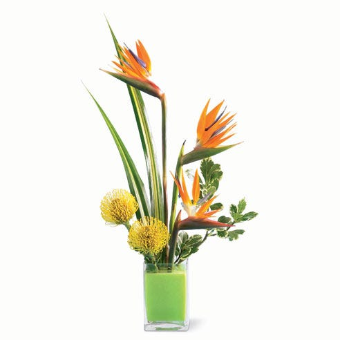 Yellow Pincushion Protea and birds of paradise flower arrangement