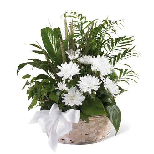 Plant basket with sympathy peace lily, palm plant and white chrysanthemum