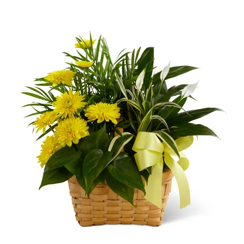 Sympathy plant dish garden of assorted flowering plants and green plants