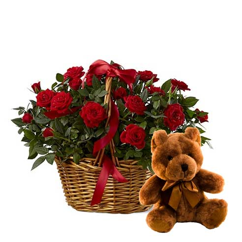 Red rose plant in a basket with a teddy bear