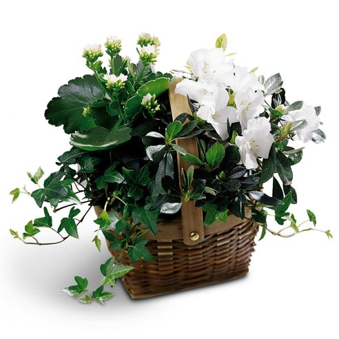 Unique gift ideas for Mother's Day kalanchoe plant delivery and flower basket