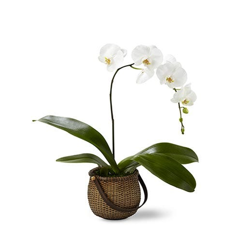 A 5 inch single stem white Phalaenopsis Orchid in a deep round woven handled basket