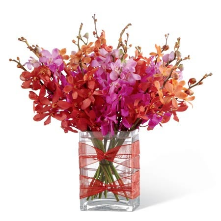 Red and fuchsia Mokara orchids in a rectangular clear glass vase
