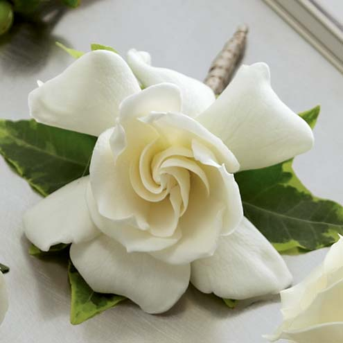 A boutonniere of a single white gardenia bloom with variegated ivy