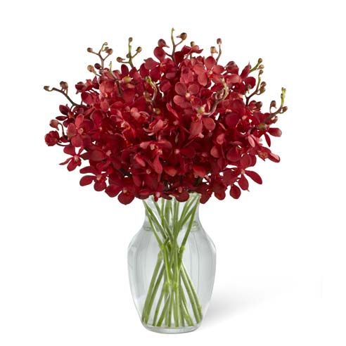 Red mokara orchid sympathy arrangement