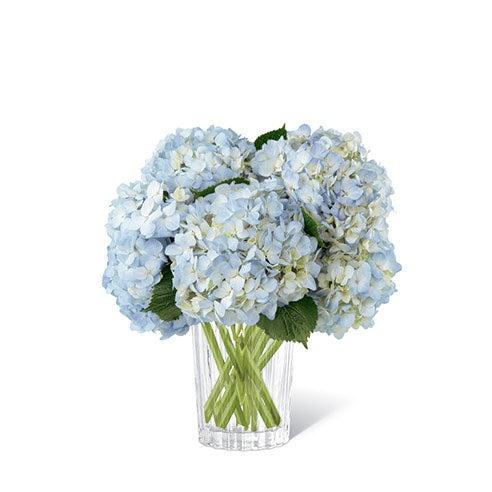 Bouquet of light blue hydrangea in a modern clear glass vase
