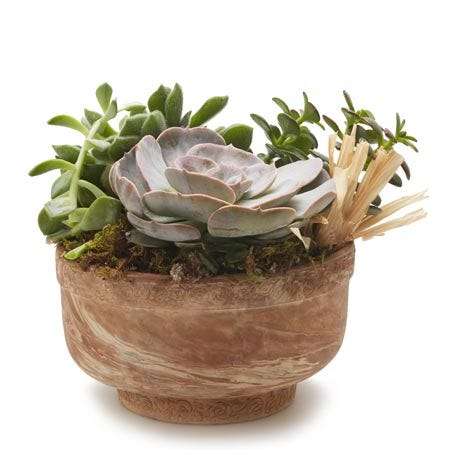 Green plant dish garden delivery with cheap succulent plants in a dish