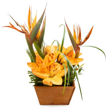 Orange lily plant and orange lily planter delivery for same day plant delivery