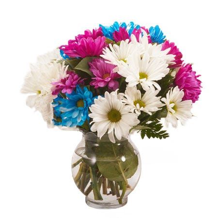 Mixed daisy bouquet a white pink and blue daisies