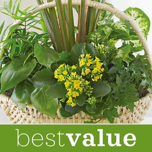 Best value dish garden plant gift at Send Flowers designed by a florist