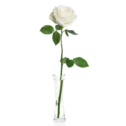 Single white rose delivery and one long stem white rose delivery