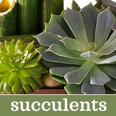succulent plant delivery