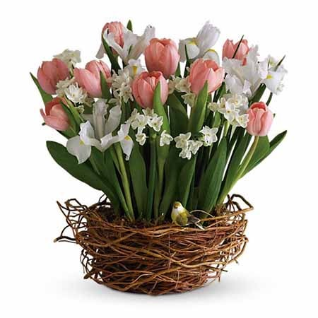 Cute valentines day gift delivery of tulips in a basket arrangement