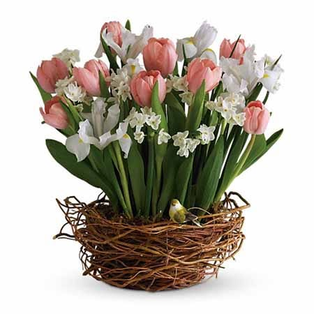 Pink tulips and white iris in a bird nest inspired pot