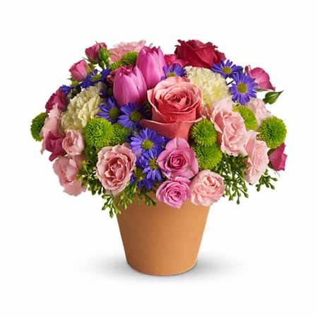 Mixed spring bouquet in a terra cotta pot with pale roses, pink tulips, yellow carnations