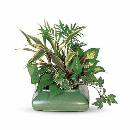 Boss's Day gift ideas small desk plant
