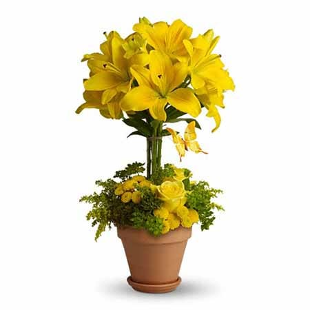 Yellow lily flower topiary arrangement same day delivery with yellow roses