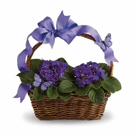 Unique administrative professionals day gift delivery of a purple violet plant delivered in a basket