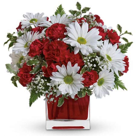 White daisy bouquet with dark red carnations and cheap flowers in red glass vase