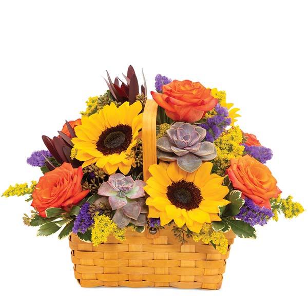 Sunflower & Succulents Basket