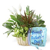Father's Day Dish Garden Balloon Gift